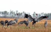 Tràm Chim là khu Ramsar thứ 2.000 của thế giới