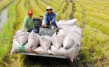 Cơ hội nâng giá trị gạo Việt