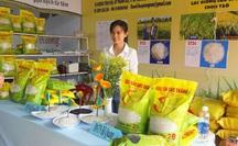"""Gạo Việt """"ngon nhất thế giới"""" có gì đặc biệt, mua ở đâu?"""