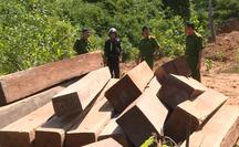 Điều công an khác địa bàn bắt gỗ lậu: Đột kích 5 điểm, thu thêm 230 m3 gỗ