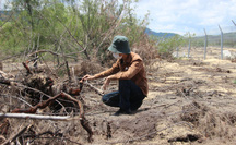 """Tình tiết bất ngờ vụ phá """"nhầm"""" 5,26 ha rừng phòng hộ ven biển Bình Định"""