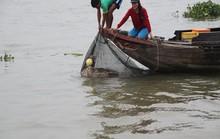 Ghe cào bắt được cá hô trên 120kg
