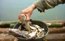 Nhà máy vỡ cống xả thải, cá chết trắng trên sông