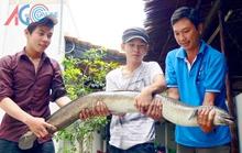 Ngư dân bắt được cá chình 11 kg