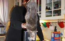 """Bắt được """"chuột quái vật"""" dài 40 cm"""