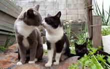 Thiên đường mèo ở Nhật Bản