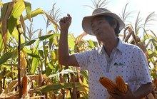 Những cuộc lấn sân âm thầm: Đổ vốn vào nông nghiệp