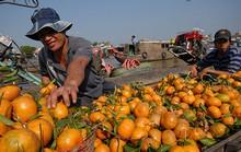 Sản phẩm nông nghiệp đối mặt nhiều rủi ro