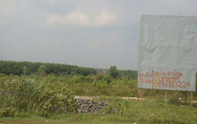 'Cò' đất 'đón gió' dự án sân bay Long Thành