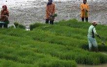 Châu Á chuẩn bị đối phó El Nino
