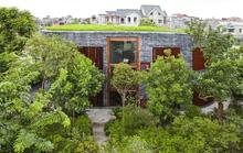 600.000 đồng/m2 để phủ cây xanh cho mái nhà
