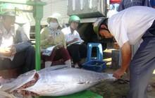 Cám cảnh cá ngừ Phú Yên
