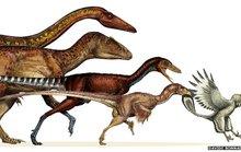 Khủng long đã tiến hóa thành loài chim ngày nay