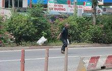 Thay dải phân cách dây thép và cây bông giấy trên Quốc lộ 1