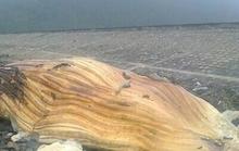 Cá lạ dài 10 m trôi dạt vào bờ biển
