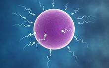 Chất lượng tinh trùng giảm sút vào mùa hè