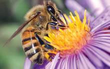 Ngồi tù 4 tháng vì lạm sát ong