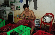 Thực hư cua biển Cà Mau siêu rẻ