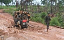 Gần 70 lâm tặc vây đánh bảo vệ rừng, cướp tài sản