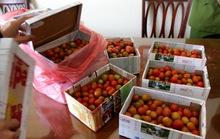 Mua dâu tây Đà Lạt, mở hộp ra toàn... cà chua bi!