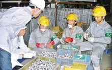 NLĐ nghèo đi xuất khẩu lao động được vay 100% vốn ưu đãi