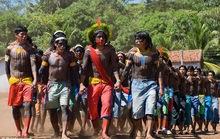 Tuyển Anh được mời đấu giao hữu trong... rừng Amazone