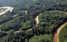 Giải cứu bé gái biến mất bí ẩn trong rừng rậm Amazon