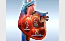 Muốn bảo vệ tim, đừng quên ma-giê
