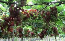 Những lý do để bạn đến Ninh Thuận hè này