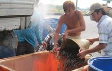 Trung Quốc điều khiển thị trường thủy sản Việt