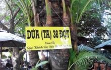 Cây dừa độc với 38 đọt
