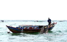 Độc đáo nghề bẫy mực làm chơi ăn thiệt trên vịnh Cam Ranh
