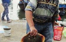 Thích gì bằng đi chợ cá sớm mai
