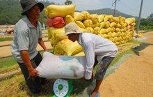 Không có lợi ích nhóm ở thị trường lúa gạo trong nước