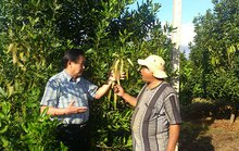 Đắk Lắk: Khuyến cáo không trồng thêm cây mắc ca