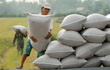 Xây dựng thương hiệu gạo quốc gia
