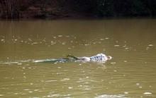 Mẹ ngất xỉu khi phát hiện xác con trong bao tải trôi sông