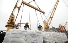 Việt Nam nhập khẩu gạo giá rẻ từ Ấn Độ?