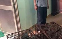 Giải cứu  11 con tê tê làm mồi cho quán nhậu