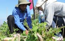 Phát động Tết trồng cây, hỗ trợ người nghèo đảo Lý Sơn