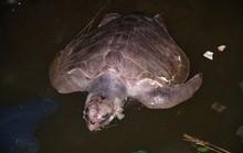 Rùa biển chết nghi ăn phải chất thải