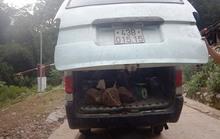 Phát hiện đối tượng đi ô tô vận chuyển 4 con Cầy hương trái phép