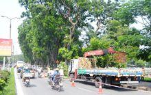 Chuyển 106 cây xanh nhường đất cho đường sắt trên cao