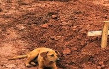 Loài chó có thực sự biết đau buồn khi người chủ mất?