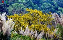 Ngất ngây Sơn Trà mùa thay lá