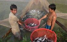 Kiểm soát chặt thủy sản xuất khẩu