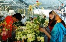 Hoa giống ngoại chiếm ưu thế