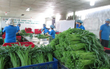 TP HCM sẽ quản lý thực phẩm từ gốc đến ngọn