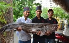 Bỏ hơn 200 triệu để mua cá hô và cá leo khổng lồ