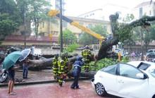Hà Nội: Mưa to, cây đổ đè xế hộp bẹp dúm trong bão số 3